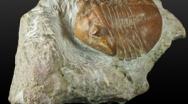 I Fossili. Cosa è un fossile e/o cosa sono i Fossili