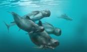 """Un delfino con la testa """"A Palla"""" scoperto nella rete"""